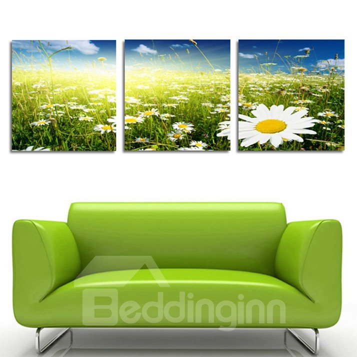 New Arrival Daisy In The Sunshine  Film Wall Art Prints
