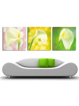 New Arrival Elegant Tulip Under Sunshine Film Wall Art Prints