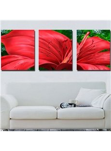 New Arrival Beautiful Red Amaryllis Canvas Wall Prints
