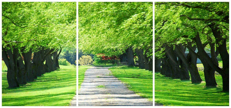 Beautiful Green Trees Along The Road Canvas Wall Prints
