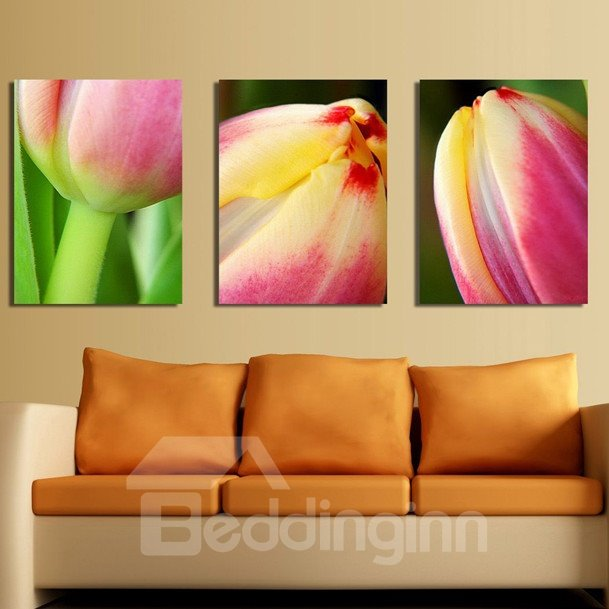 New Arrival Delicate Pink Tulip Canvas Wall Prints