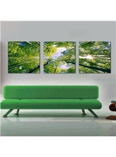 Pretty Treetop 3-Pieces of Crystal Film Art Wall Print