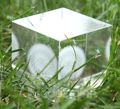 Popular Beautiful Dandelion Crystal Cube Desktop Decoration