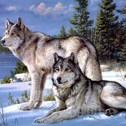 Vivid Masculine Adventurous Snow Wolf Pattern1-Piece DIY Diamond Wall Sticker