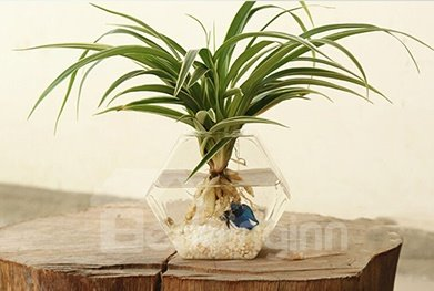Wonderful 1-Piece Wall Hanging Hexagonal Glass Vase