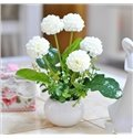 Stunning 4-Color Hydrangea Flower Set with Pot