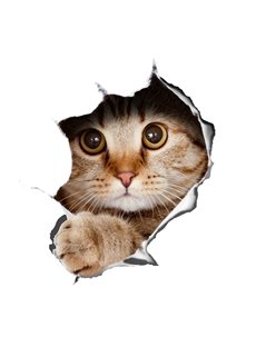 Super Cute Vivid 3D Little Cat Removable Wall Sticker