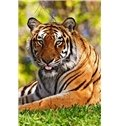 Amazing Tiger in Grassland DIY Diamond Stickers