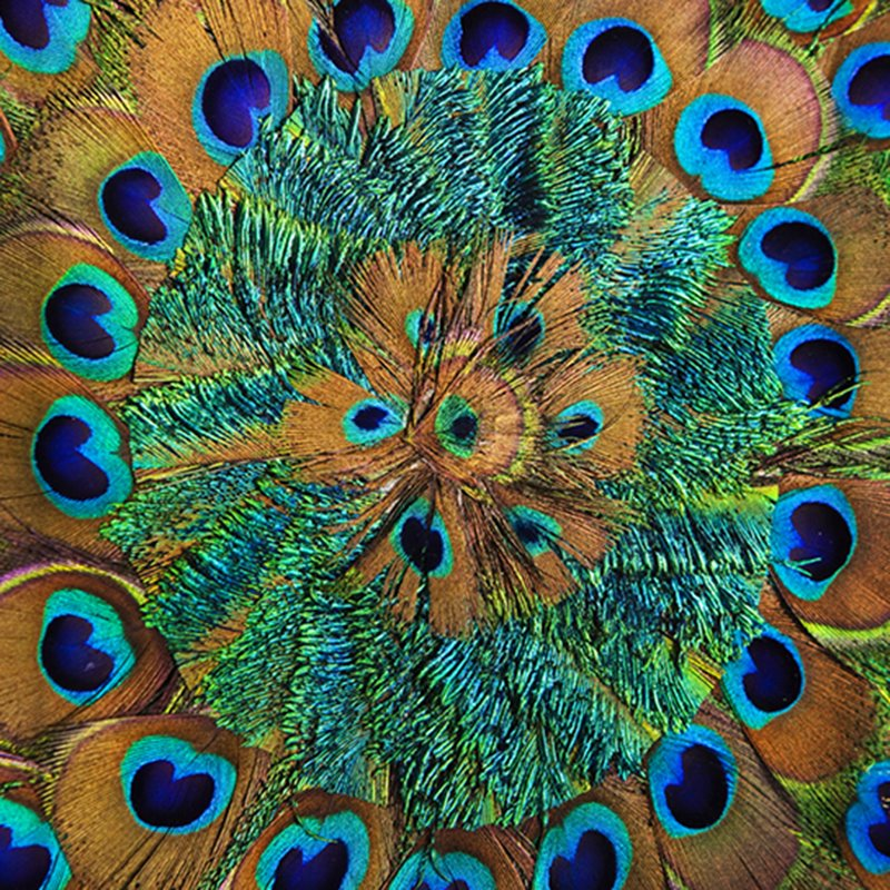 Vivid and Stunning Peacock Feathers Printing 3D Shower Curtain