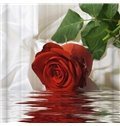 Romantic Vivid Red Rose on the Water 3D Shower Curtain