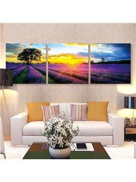 Romantic Lavender Field in Sunrise 3-Panel Wall Art Prints
