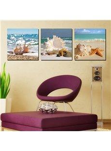 Wonderful Beach Seashells and Stafish Canvas 3-Panel Wall Art Prints