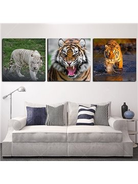 Fantastic Tigers Picture Sets Frameless 3-Panel Wall Art Prints