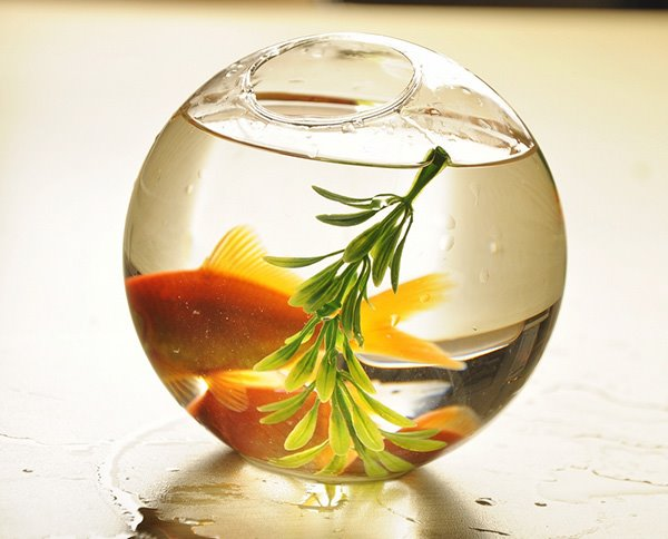 Wonderful Desktop Decoration Glass Fishbowl Flower Vase