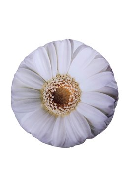 Vivid 3D Big White Flower Design Plush Cushion