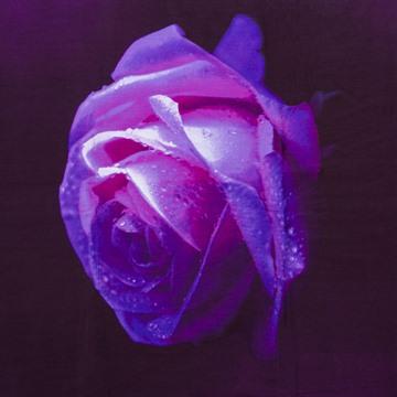 New Charming Big Dewy Purple Rose Print 3D Duvet Cover Sets